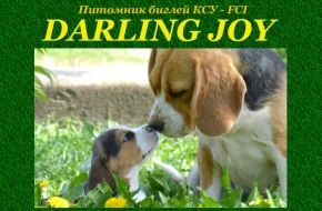 питомник биглей DARLING JOY