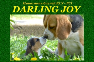 darling-joy-kennel