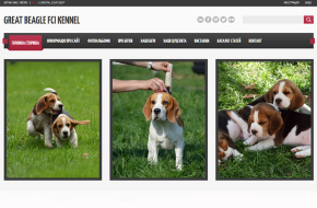питомник биглей GREAT BEAGLE