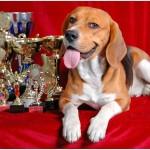 Oliver Ferst Beagle