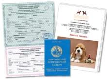 Документы щенка бигля КСУ