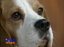 beagle_film