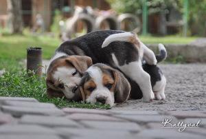 pups-katA