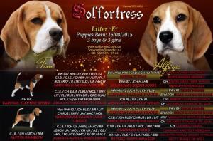 solfort-pups