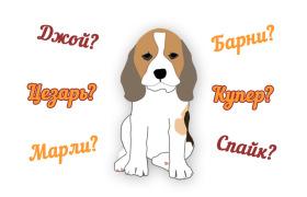 100 популярных кличек для щенков