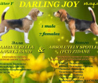Щенки бигля в п-ке DARLING JOY, 16.04.2016