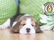 pups-fp-16