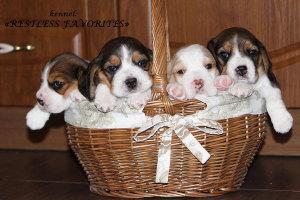 pups-rf