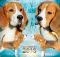 sf-pups-031216