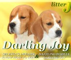 Щенки бигля в п-ке DARLING JOY, 27.03.2017