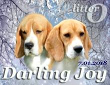 Щенки бигля в п-ке DARLING JOY, 07.01.2018