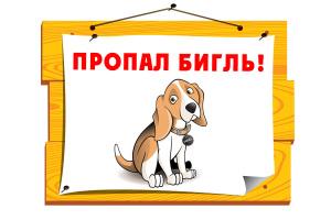 lost-beagle-4