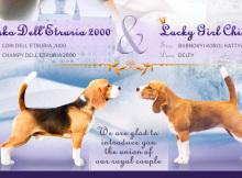 pups-chili-21217