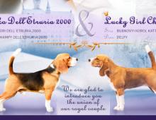 Щенки бигля от CIAKO DELL'ETRURIA 2000 и LUCKY GIRL CHILI, 02.12.17