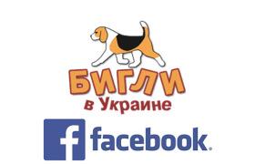 Бигли в facebook