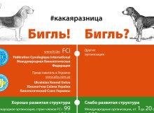 infographics_head