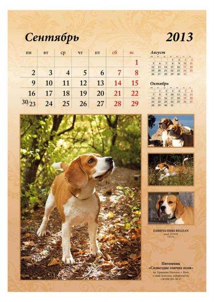 image 2013-beagle-a310-jpg