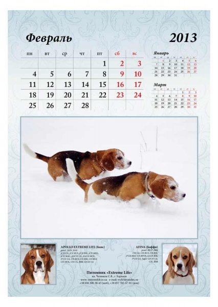 image 2013-beagle-a33-jpg