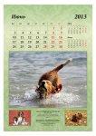 image 2013-beagle-a37-jpg