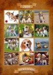 image beagle-2014-a3-jpg
