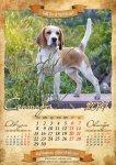 image beagle-2014-a3-10-jpg