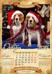 image beagle-2014-a3-13-jpg