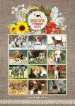 image 2015-beagle-00-1-jpg