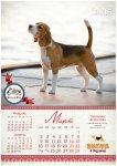 image beagle-2014-a3_4-jpg