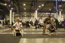 17-18 декабря 2011, 2xCACIB, Вильнюс