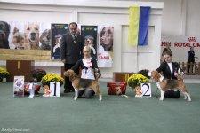 10-10-2010 - Чемпионат биглей, Львов