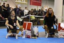 8-12-2012 - Чемпионат биглей, Киев