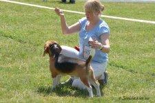 image beagle02-jpg