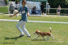 image beagle03-1-jpg