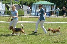 image beagle03-bj-jpg