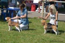 image beagle03_04-jpg