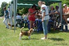 image beagle05-jpg