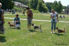 image beagle06-bob-jpg