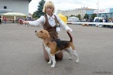 07-09-2013 - Моно биглей, Бердичев