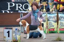 image beagle_jadore-zhit-big1-01-jpg
