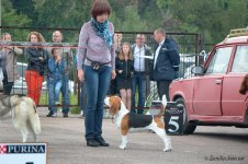 image beagle_jadore-zhit-bis3-01-jpg