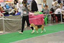 image 26-04-14_zv_1_puppy-jpg