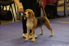 image 27-04-14_u_2_puppy-jpg